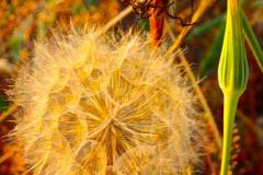 Angela Burnett - 2. Seeds0154