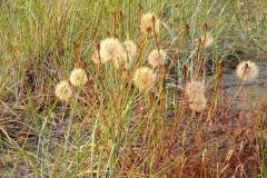 Angela Burnett - 3. More seeds 0156
