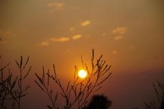 Dorothy Singleton - DSC06405 - Iona at Sunset1