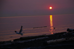 Dorothy Singleton - DSC06451 - Sunset at Iona1