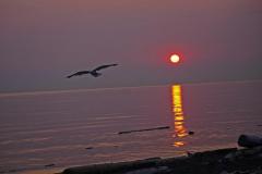 Dorothy Singleton - DSC06453 - Sunset at Iona1