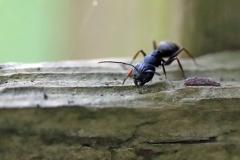 Paul Rennie - Rennie_1_ant eating fence