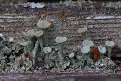Paul Rennie - Rennie_3_tiny lichen garden