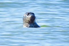 Dorothy  - dorothy_2_Portraits IMG_7014 Harbor Seals
