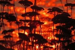 Brian Phillips - Sunset At Gary