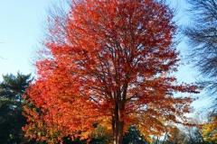 Paul Rennie - Autmn tree - Rennie