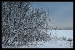 Klaas Snow day #4