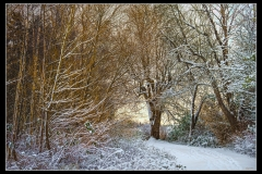 Klaas Snow day #5