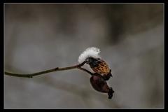 Klaas Snow day #6