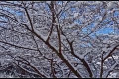 Klaas Snow day #8