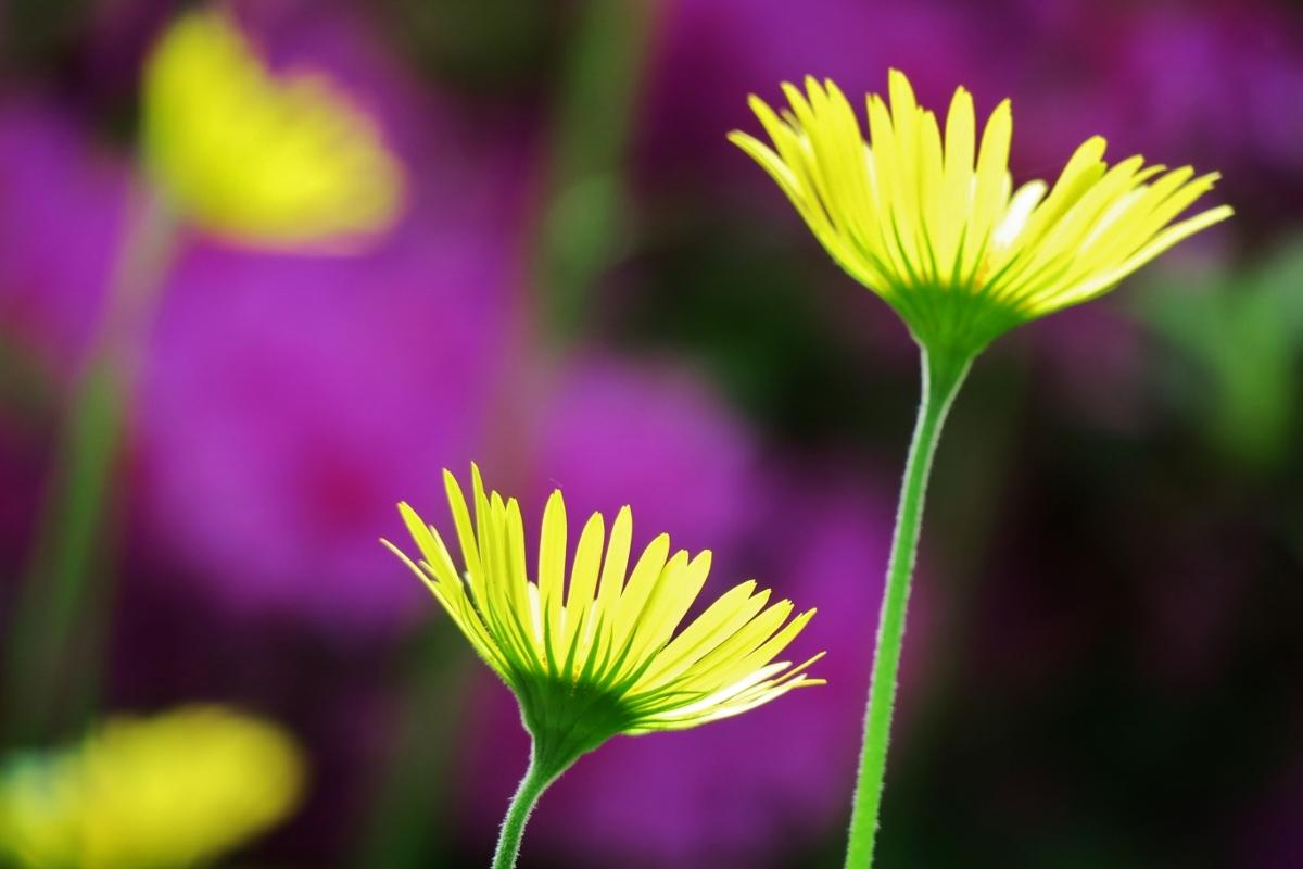 Man-kay-KOON-Flower_2
