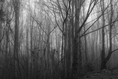 Michael-C-09_Urban-woods