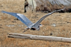 Paul-Rennie-Heron-launch