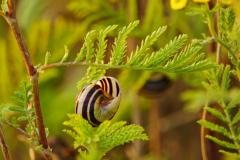 Dorothy Singleton - DSC06371 Snail1