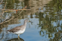 Angela Gauld - #2Yellowlegs