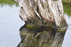 Mary Zwick - 2-Stump Reflection