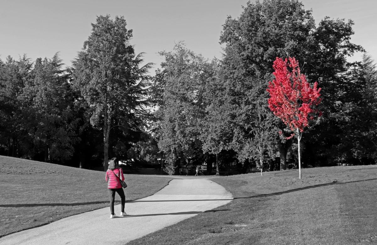 Paul Rennie - 1. Autumn red and black