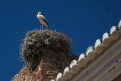 Francis - Stork sentinel Silves PT