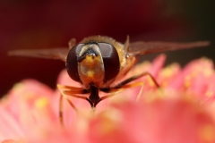 Paul Rennie - 3. bee like fly portrait1