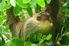 Dorothy  - IMG_1470 Sloth4