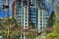 Dorothy-dorothy_3_Abstract-IMG_5027-Minoru-Park6_x2