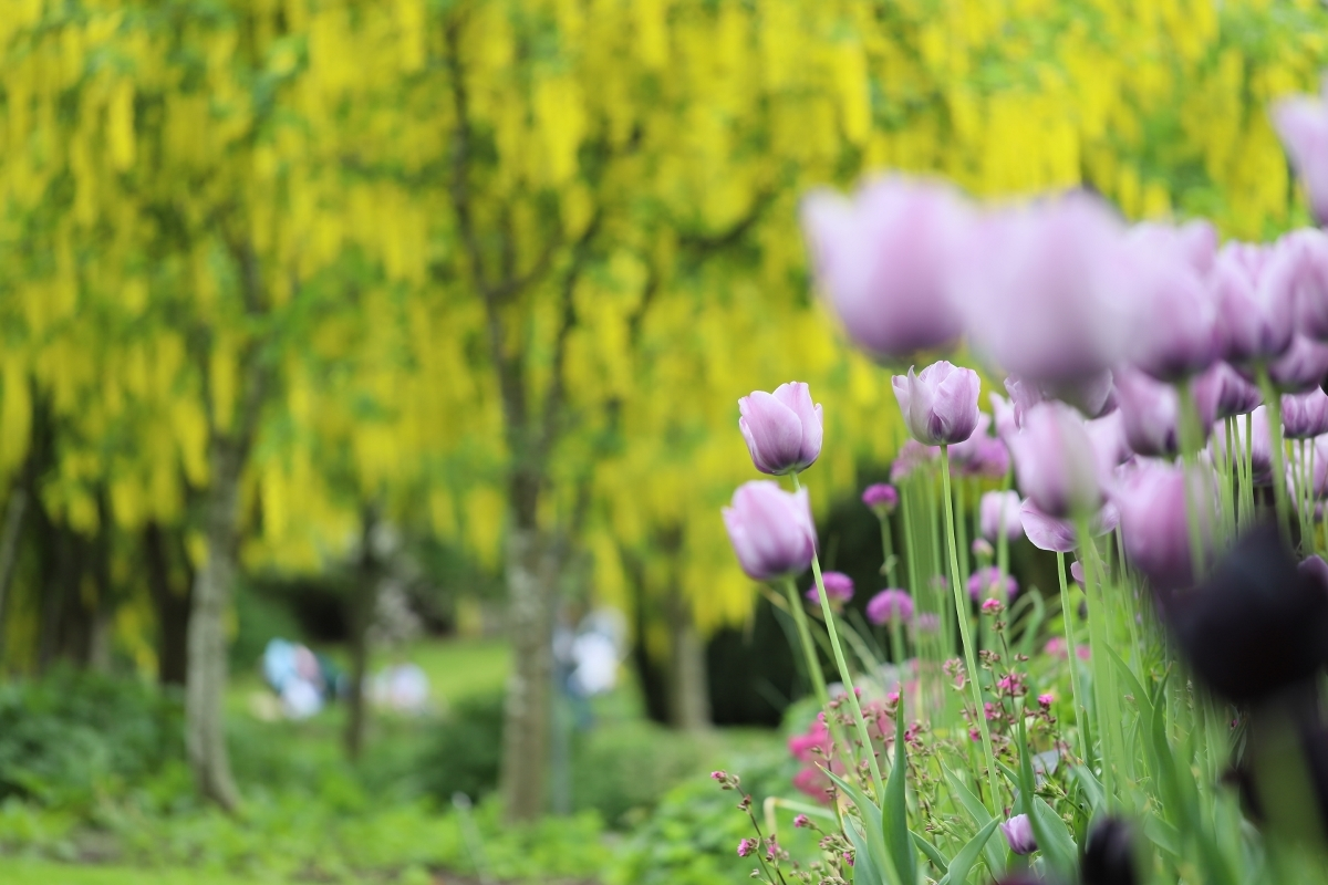 Man-kay-KOON-Flower_1