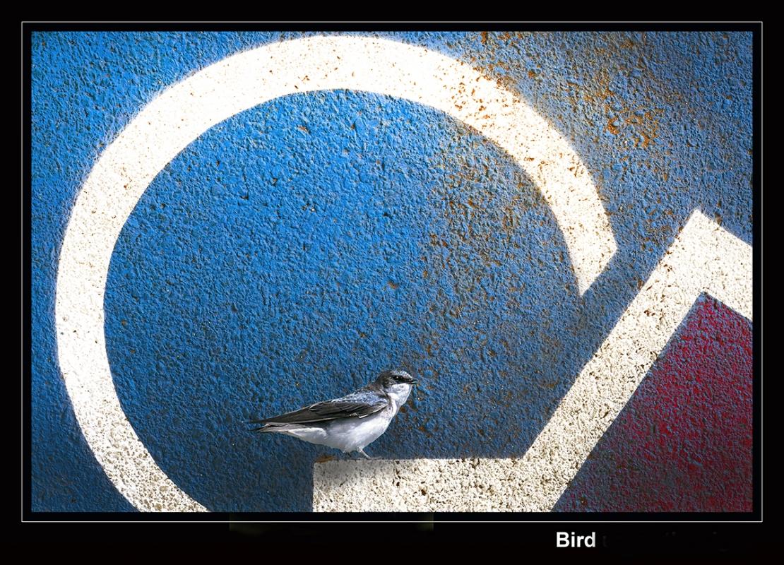 Peter-Lau-peterlau_3_bird