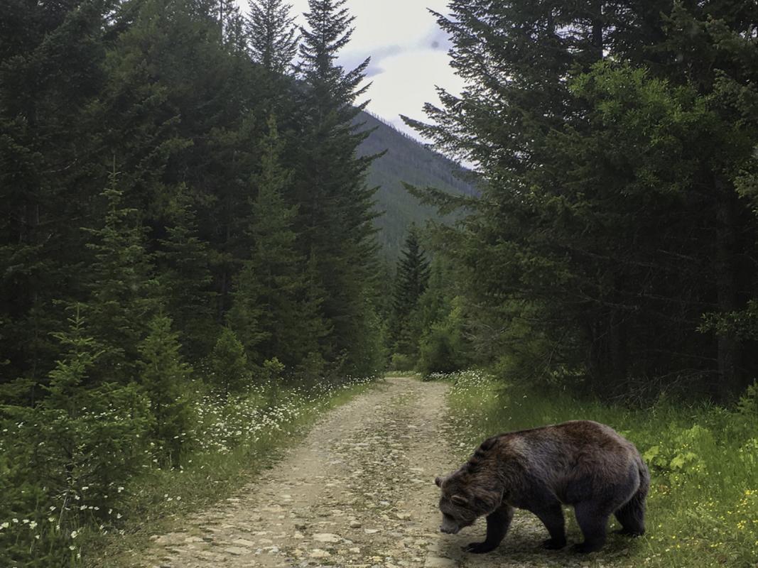 Chuck-Vaugeois-4-Bear-in-the-woods