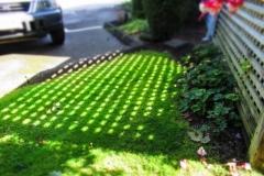 Dorothy-IMG_4500-Miniature-Effect1