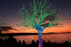 Dorothy-dorothy_4_ShNTell-DSC09229-Eugenia-the-Oak-Tree2