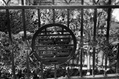 barbara-glick-IMG_0827-fence