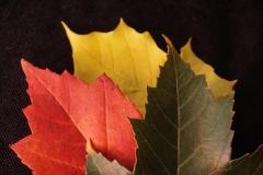 Dorothy-dorothy_1_ShNTell-DSC08867-Autumn