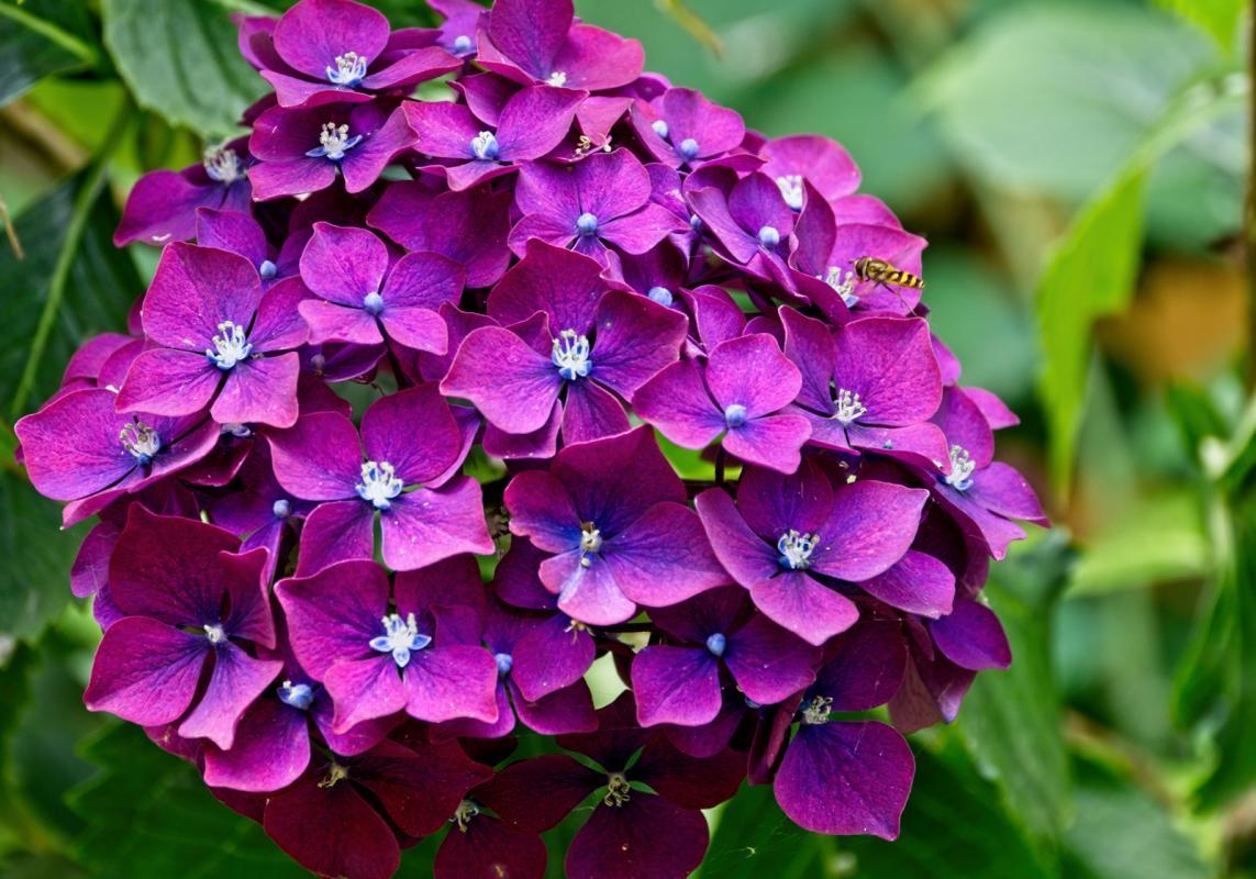 Mary-Zwick-5-Flower