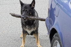 Mary-Zwick-1-Police-Dog