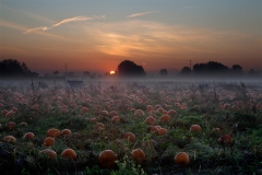 Cliff-2-SunriseonPumpkinField_MG_5598_DEMO-2