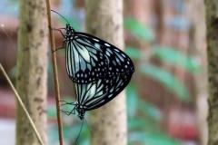 Dorothy-dorothy_3_ShNTell-IMG_9585-Butterflies1