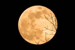 michael-chin-Pink-moon