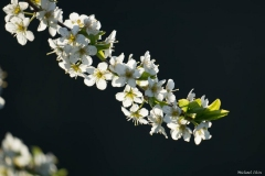 michael-chin-Spring-2020-blooms