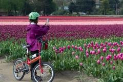 Melonhead-tulips