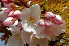 gerry-boretta-spring-views-1