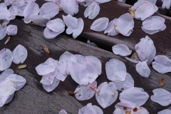 gerry-boretta-spring-views-4