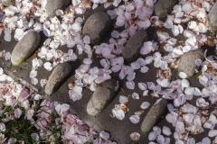 gerry-boretta-spring-views-5
