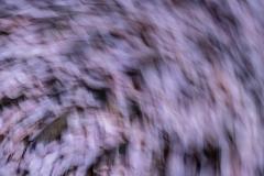 gerry-boretta-spring-views-7