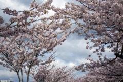 gerry-boretta-spring-views-8
