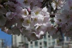 gerry-boretta-spring-views-9