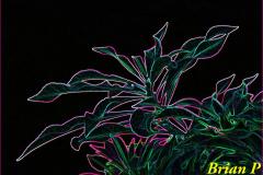 Brian-G-Phillips-Glowing-In-The-Dark-1080