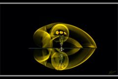 Klaas-Focker-Klaas-Flower-2