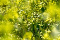 michael-chin-Garrys-Point-flowers