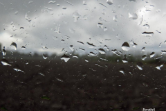 Dorothy-IMG_3031-Glass-Rain1