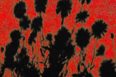Brian-G-Phillips-Flower-Pop-1080